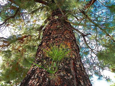 Pine Tree Tower by Diane Lynn Hix