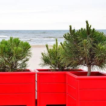 Gynt - Pine trees at seaside