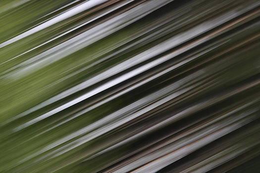 Dreamland Media - Pine Woods Sweep