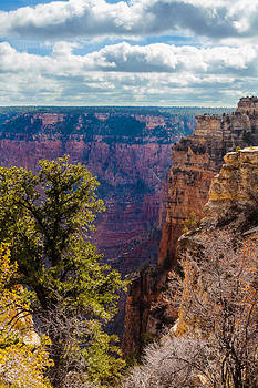 Pines and Cliffs at the Grand Canyon by Ed Gleichman