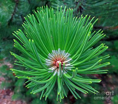 Pines End by Lisa Jones