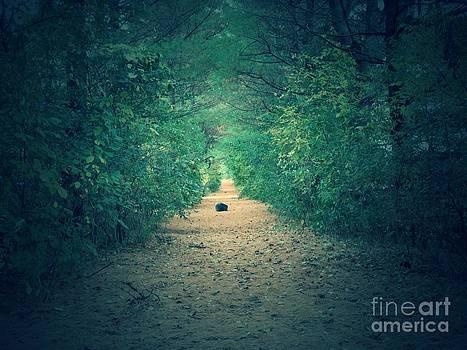 Piney Path by Jon Glynn