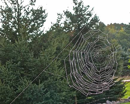 Pining for the Web by Randy Rosenberger