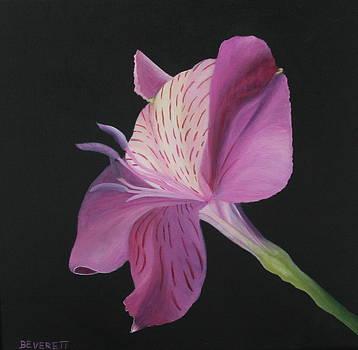 Pink Alstro by Brenda Everett