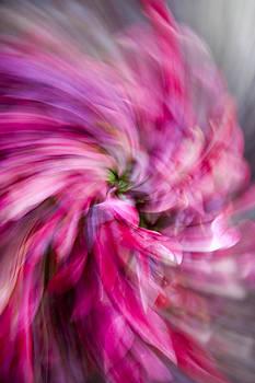 JOHN FERRANTE - Pink and Purple Pinwheel