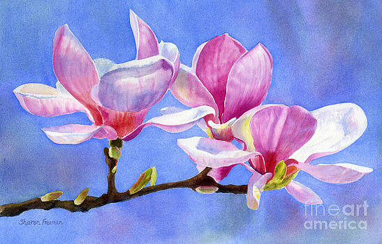 Sharon Freeman - Pink and White Magnolias with Background