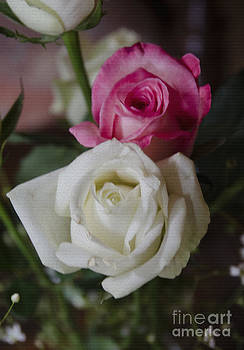 Pravine Chester - Pink and White