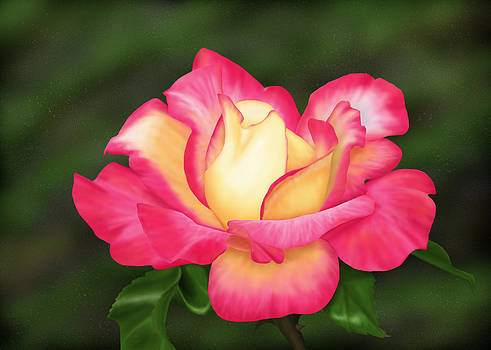 Pink and Yellow Rose by Michelle Moroz-Chymy