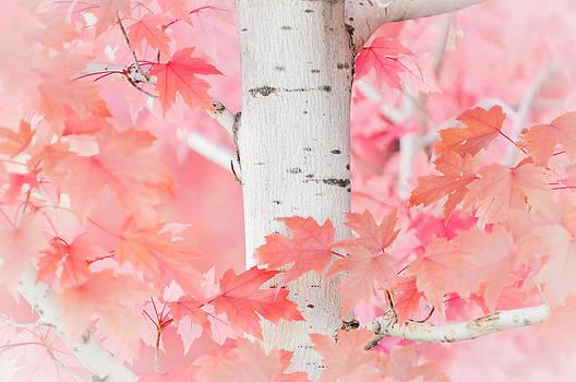 Pink Aspen by Daniel Huerlimann