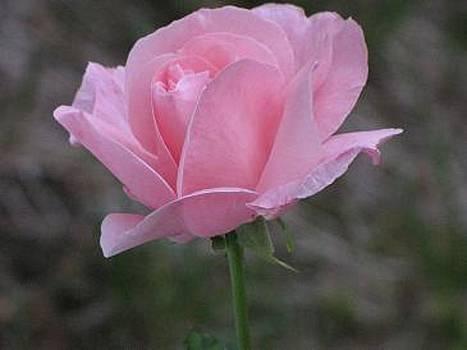 Pink Awakenings by Harry Wojahn