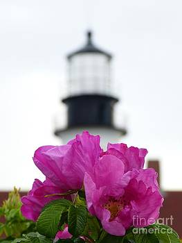 Christine Stack - Pink Beach Rose with Portland Headlight