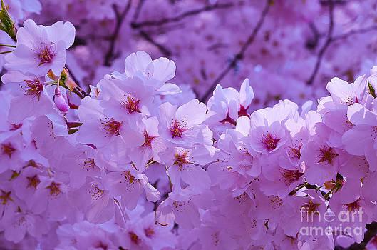 Pink Beauties by Christian LeBlanc