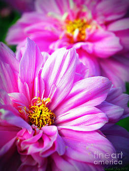 Pink Beauties  by Deborah Fay