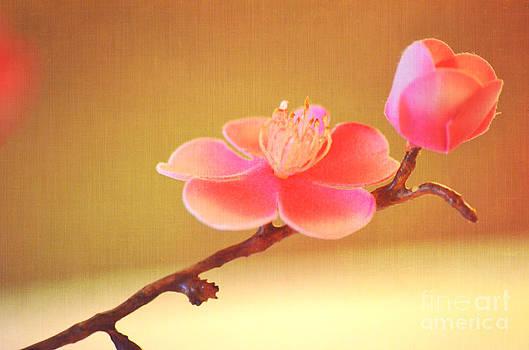 Pink Bloom by Christian LeBlanc