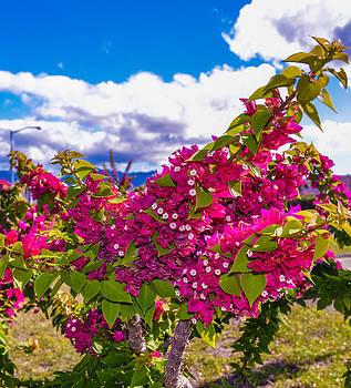 Pink Bush by Lisa Cortez
