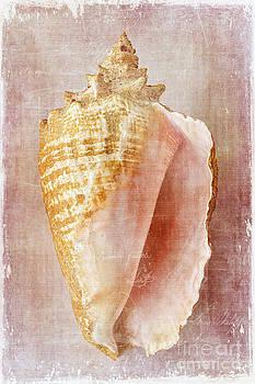 Pink Conch by Cindi Ressler