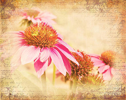 Pink Cone Flowers by Pam  Holdsworth