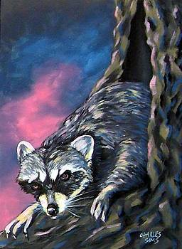 Pink Coon by Charles Sims