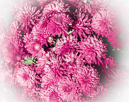 Debra  Miller - Pink Cotton Candy