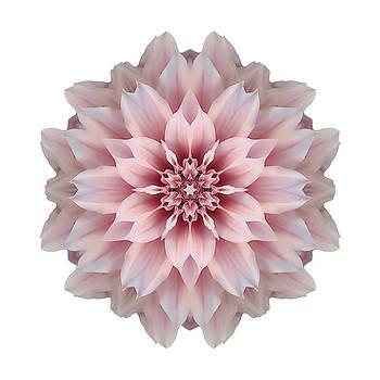 Pink Dahlia I Flower Mandala White by David J Bookbinder