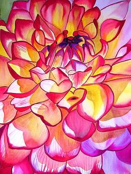 Pink Dahlia by Sacha Grossel