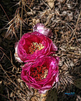 Pink Desert Cups 9547 by Torrey E Smith