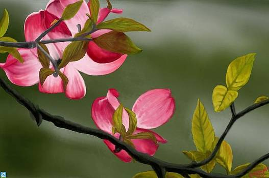 Pink Dogwood by Kutedymples
