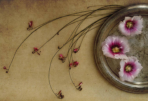 Pink by Eleanor Caputo