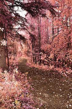 Pink Fall by Larysa  Luciw