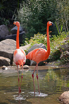 Pink Flamingo Day at the Zoo by Making Memories Photography LLC