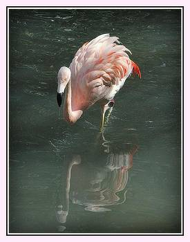 Pink Flamingo Reflection by Donald Hill