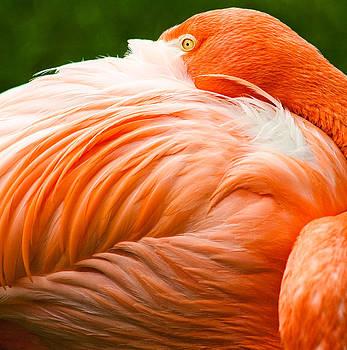 Pink Flamingo by Viacheslav Savitskiy