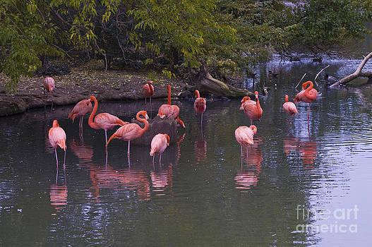 Tim Mulina - Pink Flamingos
