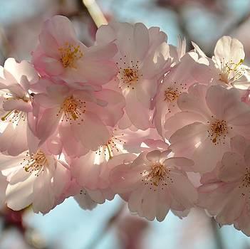 Gynt   - Pink Florescence