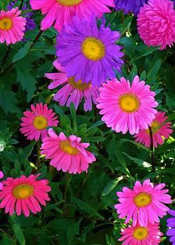 Pink Flourish by Alison Richardson-Douglas