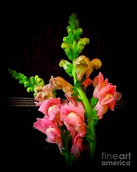 Pink Snapdragon 2 by Rose Wang
