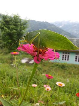 Pink Flower And Insect by Smrita Pradhan