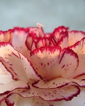 Pink Flower by AR Annahita