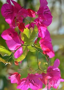 Pink Flower Dance by Kathleen Struckle