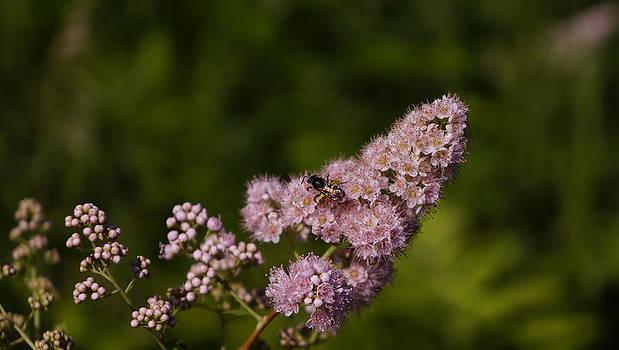 Dawn Hagar - Pink Flower