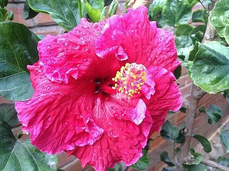 Pink Flower by Diego  Zegarra