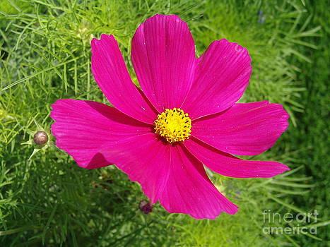 Pink flower by Nur Roy