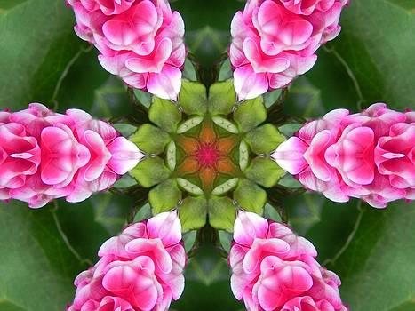 Pink Flower Star Mandala by Diane Lynn Hix