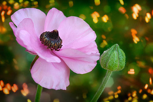 Pink Flower by Zoran Buletic
