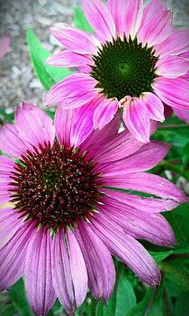 Pink Flowers by Courtnee Epps