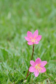 Pink Flowers by Larry Van Valkenburgh