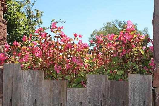 Pink Flowers by Renee Braun