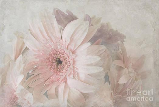 Pink gerberas by Cindy Garber Iverson