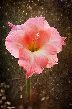 Pink Gladiolus by Zoran Buletic