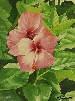DK Nagano - Pink Hibiscus